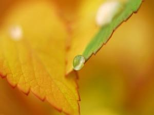 Gota de agua sobre una hoja
