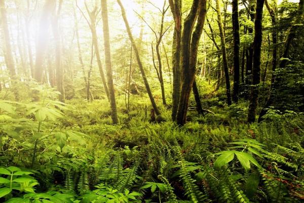 Un bosque frondoso