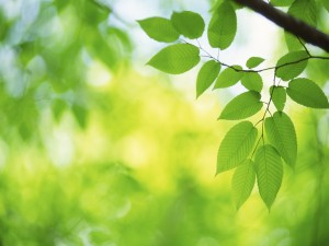 Ramita con hojas verdes