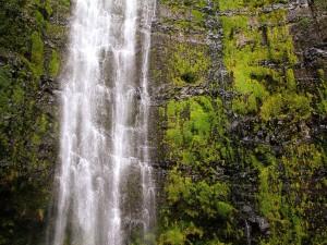 Postal: Musgo rodeando la cascada