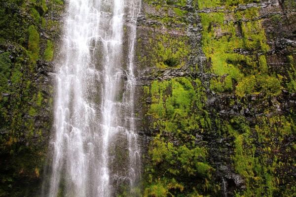 Musgo rodeando la cascada