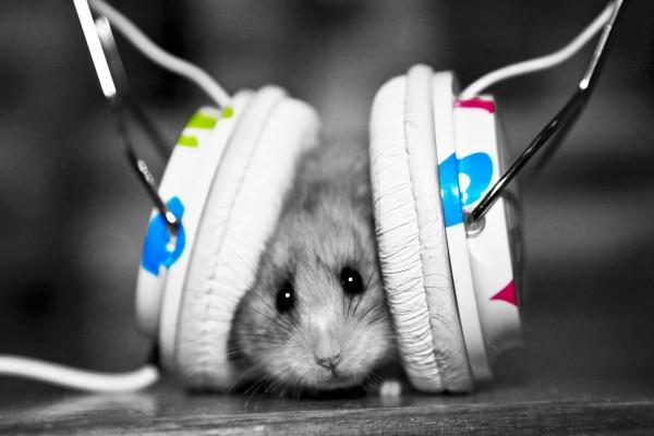 Pequeño ratón escuchando música