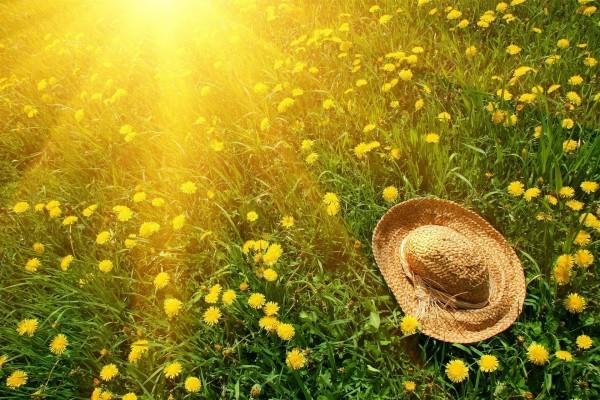 Sombrero de paja sobre flores amarillas