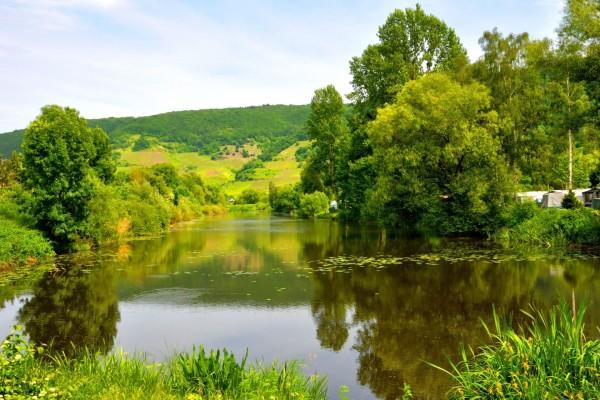 Un lago rodeado de vegetación