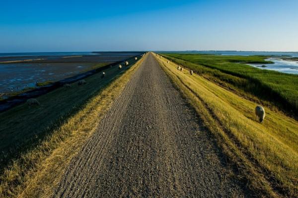 Ovejas a los lados de un camino rural