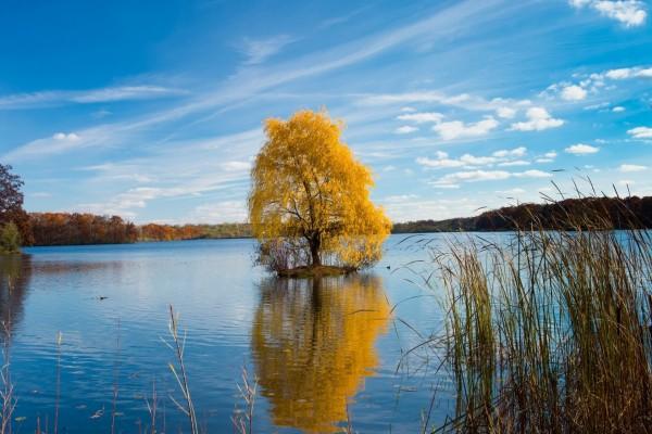Árbol en el agua