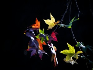 Hojas de varios colores