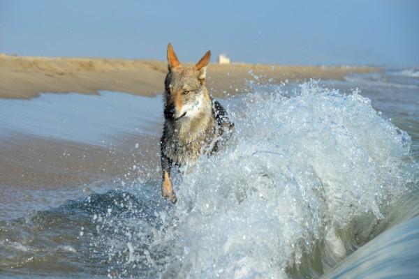 Perro entre las olas