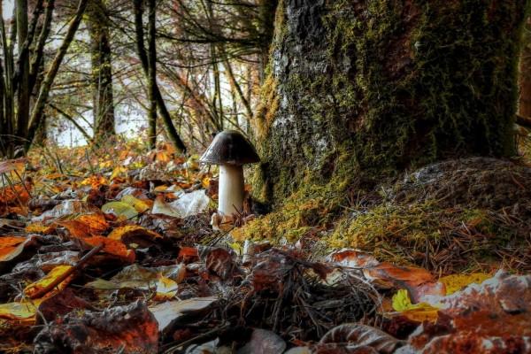 Seta en el bosque
