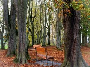 Postal: Bancos en el bosque