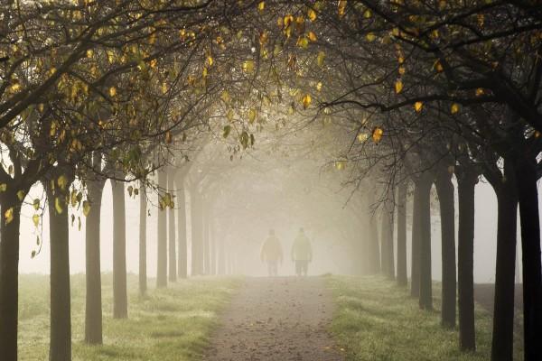 Caminando por el parque con niebla