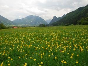 Flores amarillas en un verde prado