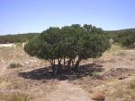 Un árbol del monte