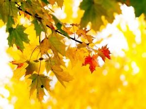 Postal: Las hojas de un árbol en otoño