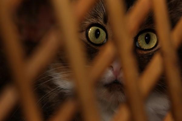 Los ojos brillantes de un gato
