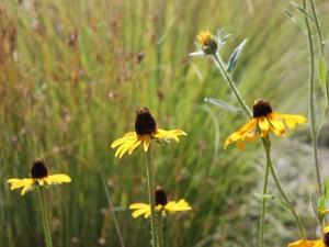 Curiosas flores silvestres