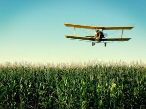 Avioneta sobre el maizal