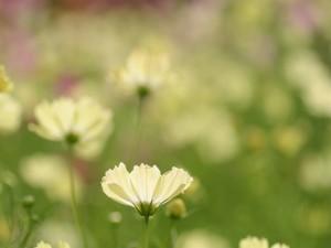 Postal: Flores silvestres blancas