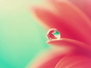 Postal: Gota de agua en el pétalo de una flor
