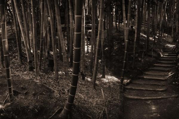 Camino entre el bambú