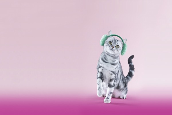 Gato con orejeras