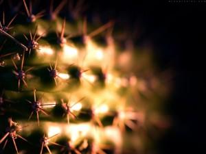 Postal: Cactus con pinchos