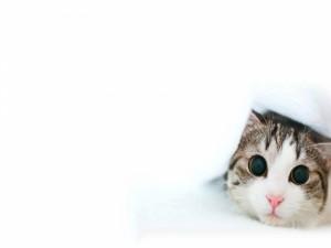 Postal: Gatito con las pupilas dilatadas
