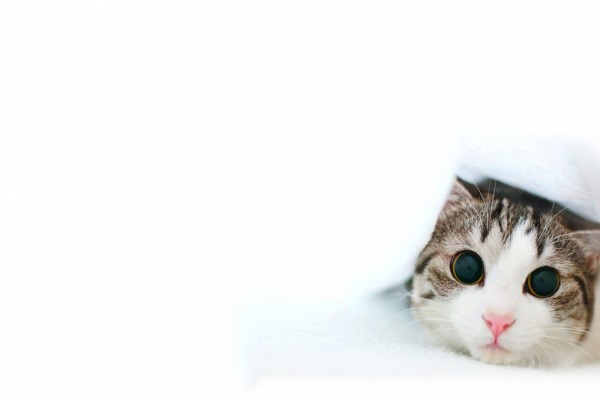 Gatito con las pupilas dilatadas