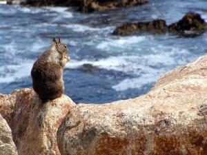 Ardilla sobre una roca en el mar