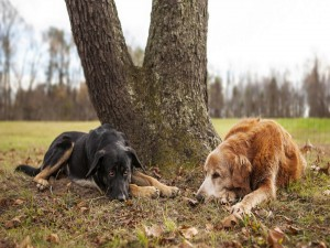 Dos perros descansando bajo la sombra de un árbol