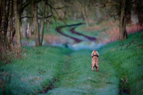 Perrito paseando por el sendero