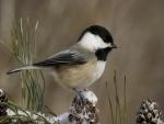 Bonito pájaro encima de una piña