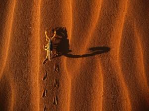 Postal: Escorpión en la arena