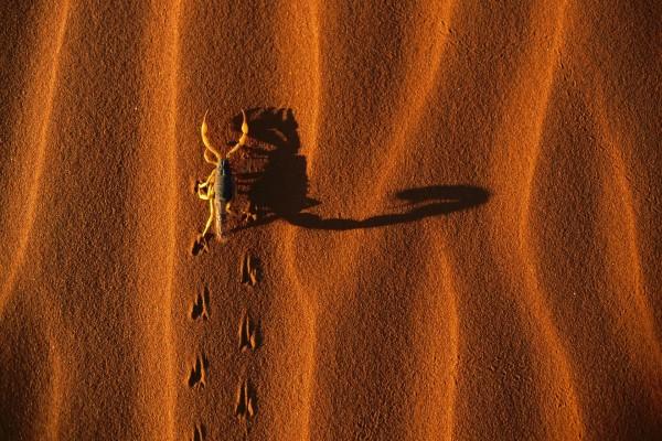Escorpión en la arena