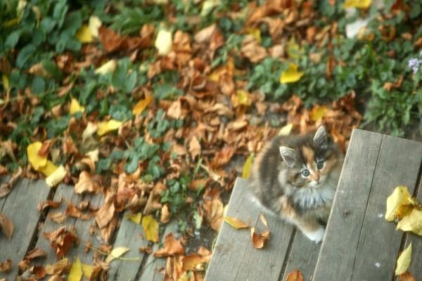 Gatito en unas escaleras con hojas otoñales