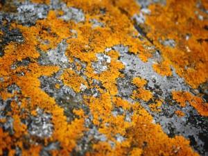 Piedra con musgo
