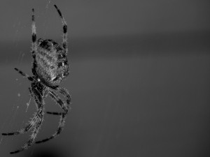 Postal: Araña en su telaraña