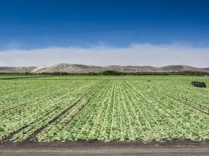 Postal: Campo de cultivo verde