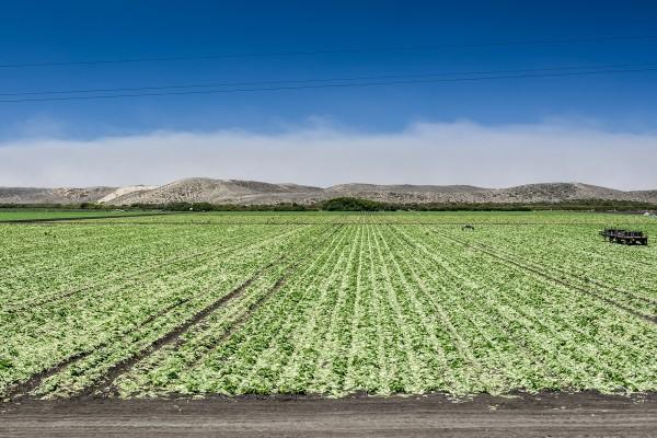 Campo de cultivo verde