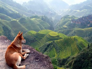 Perro observando el paisaje