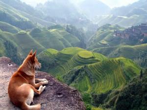Postal: Perro observando el paisaje