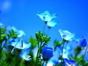 Postal: Bellas flores azules