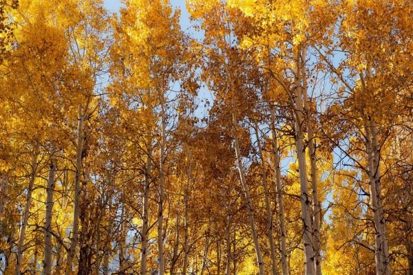 Árboles tocando el cielo en otoño