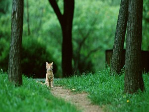 Gatito en un camino del bosque