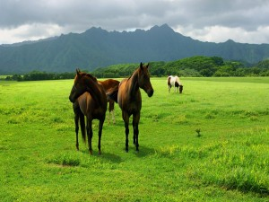 Postal: Caballos en un prado verde