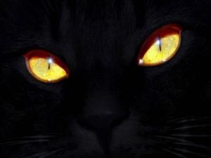 Los ojos de un gato negro