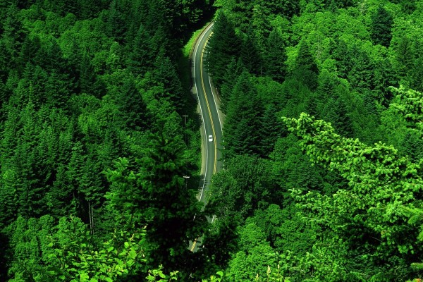 Carretera entre árboles verdes