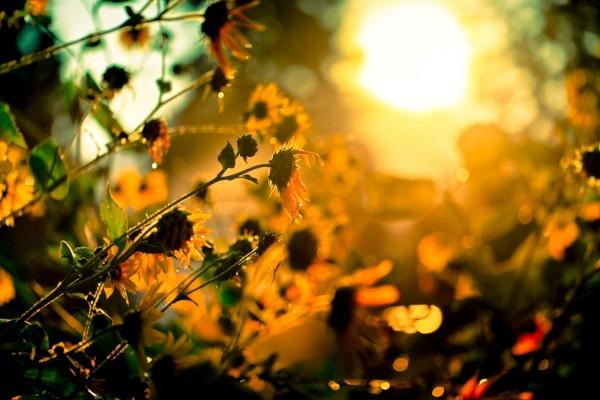 Flores hacia el sol