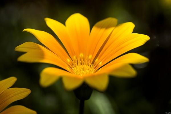 Una flor amarilla muy bonita