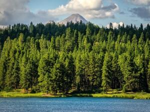 Postal: Pinos en el lago